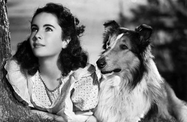 Early Days: Elizabeth Taylor in an MGM studio pose with co-star Lassie